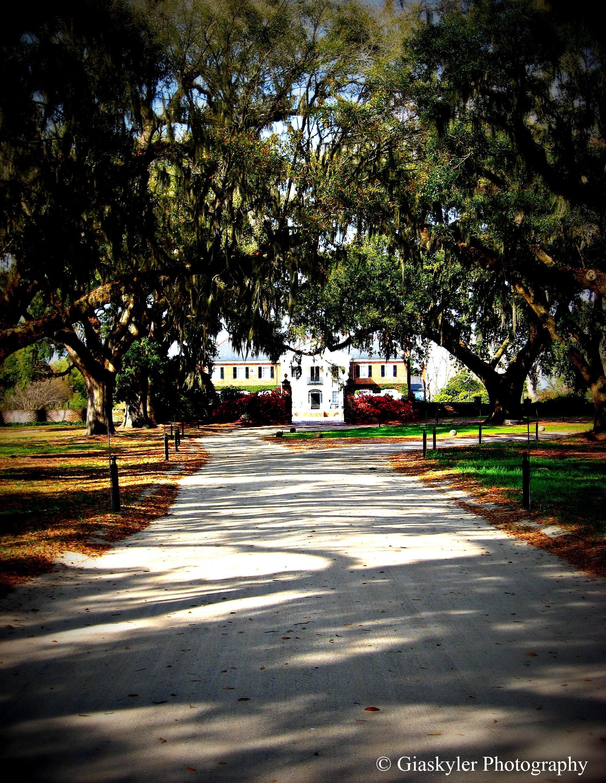 Boone Hall Plantation 2013